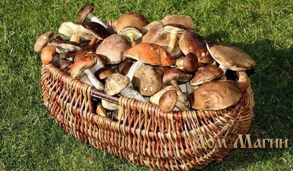 К чему снятся грибы на кладбище фото