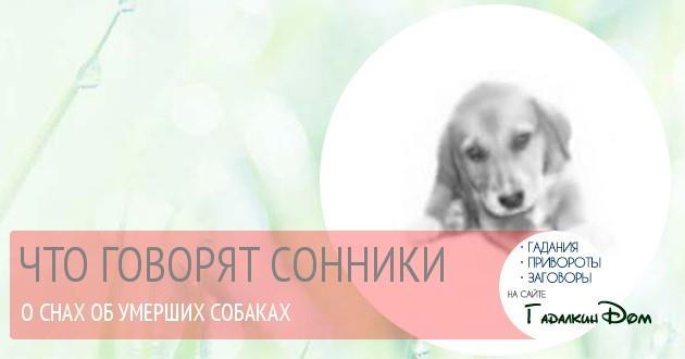 Видеть собаку в крови во сне — повстречаете человека, который сможет стать вашим единомышленником и лучшим другом.