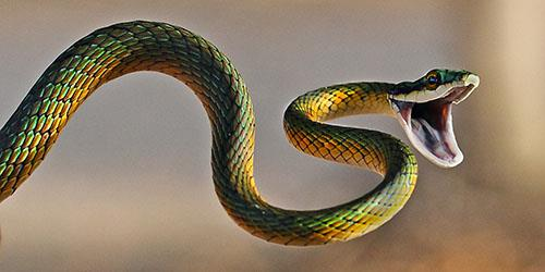 к чему снится отрубить голову змее