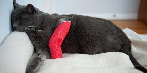 кот со сломанной лапкой