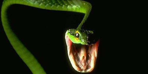 к чему снится укус змеи