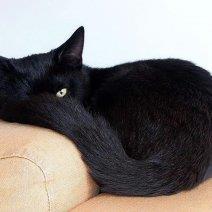 Выясняем, к чему снится черная кошка!