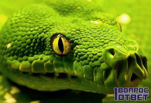 К чему беременной снится змея 21