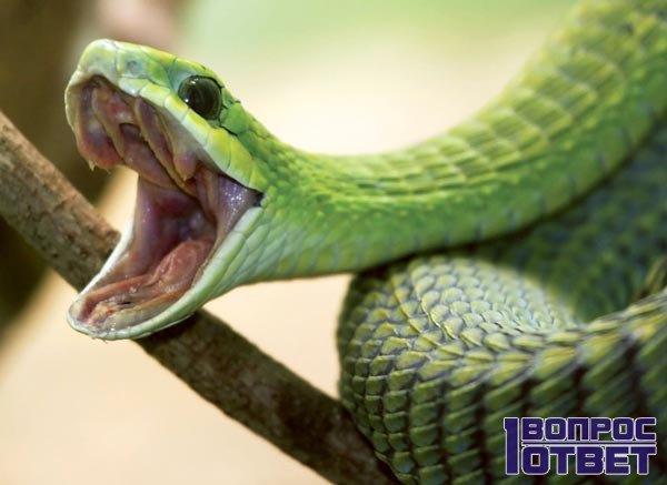 К чему беременной снится змея 71