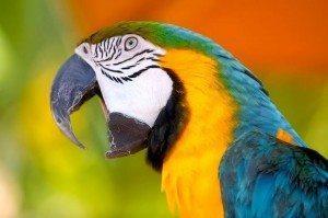 К чему снится попугай залетел в дом фото