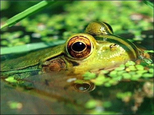 К чему снятся мертвые лягушки женщине фото