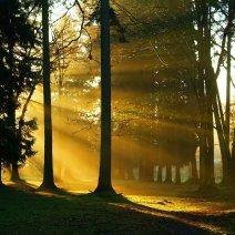 К чему снится желтый цвет: цветовая символика сновидений