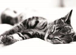 prisnilsy cat4