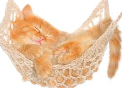 prisnilsy cat5