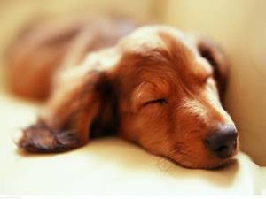 Сон о мертвой собаке - к болезненному разводу