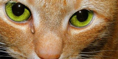плачет животное