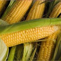 К чему снится кукуруза: значение сна