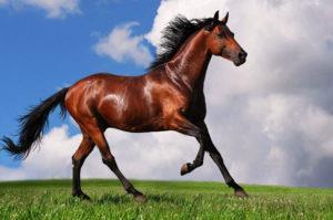 К чему снится сбитая лошадь фото