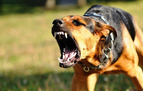 Фото Сонник злая собака лает