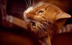К чему снится что кот кусает за ноги
