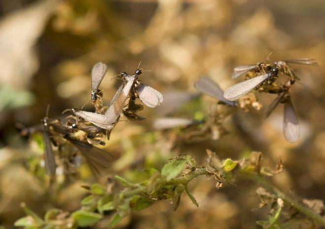 К чему снятся муравьи, большие и черные, видеть во сне много муравьев, ползающих по телу или постели - подробное толкование сна