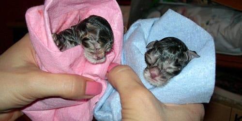 видеть во сне новорожденных котят