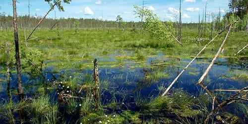 самому тонуть в болоте