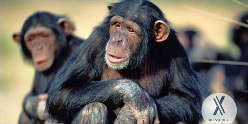 К чему снятся обезьяны женщинам нападающие