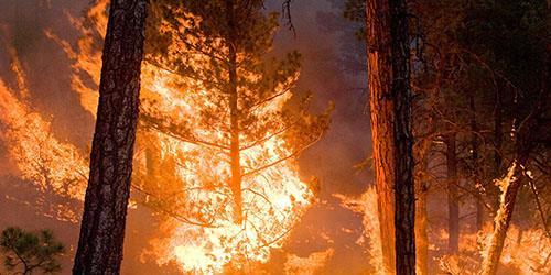 дерево горит во сне