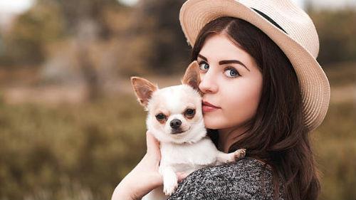 к чему снится белый щенок девушке