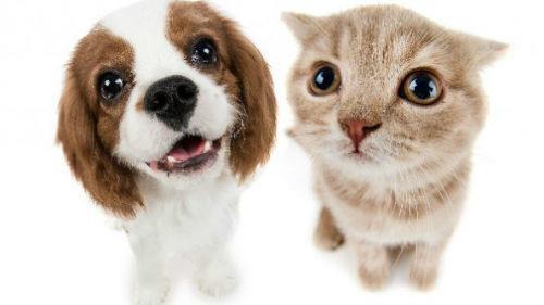 к чему снится белый щенок с котенком