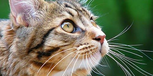 К чему снится кот который ест рыбу фото