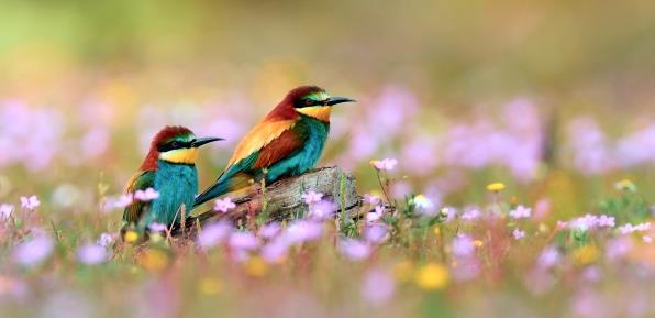 К чему снятся цветные птички фото