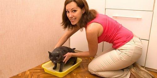 убирать говно за котом