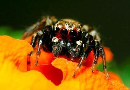 паук на оранжевом цветке
