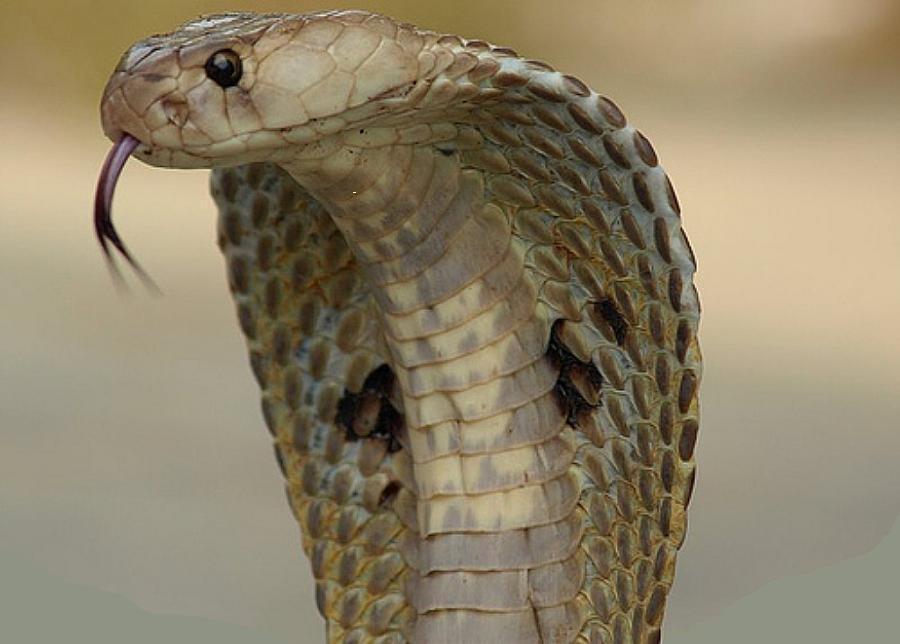Змея сон со змеёй
