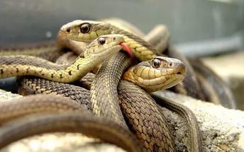 Сонник укусила змея к чему снится укусила змея