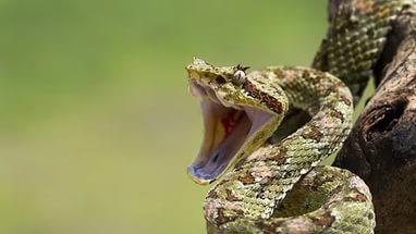 Сонник большая змея к чему снится змея