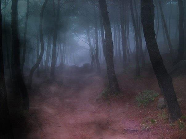 Туманное сновидение