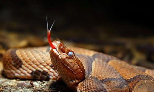 К чему снится играть со змеей фото