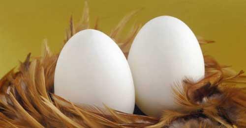 Фото К чему снятся яйца с кровью куриные