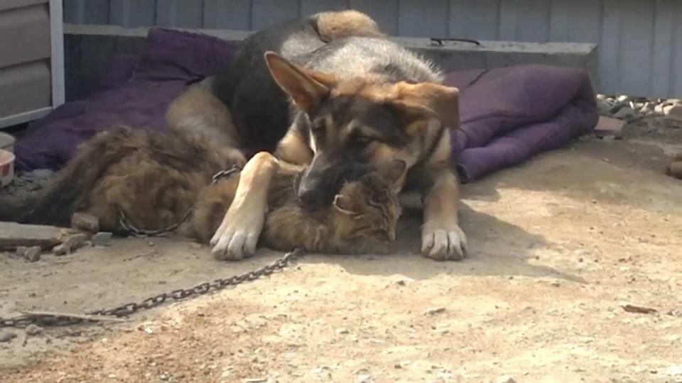 Сонник собака съела кошку фото