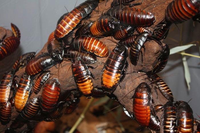 Сонник: к чему снятся тараканы? Много тараканов во сне
