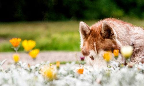 Фото Сонник хоронить собаку