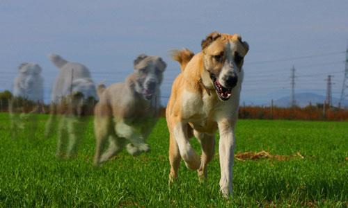 Сонник хоронить собаку фото
