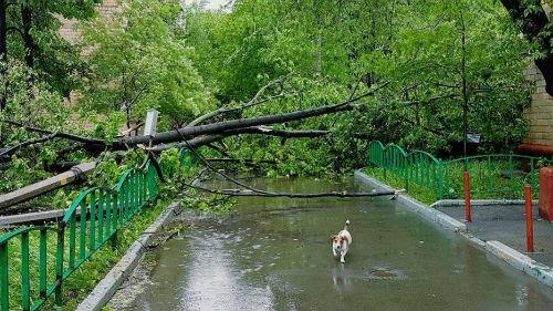 к чему снится что упало дерево на дорогу