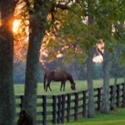 Конь за изгородью
