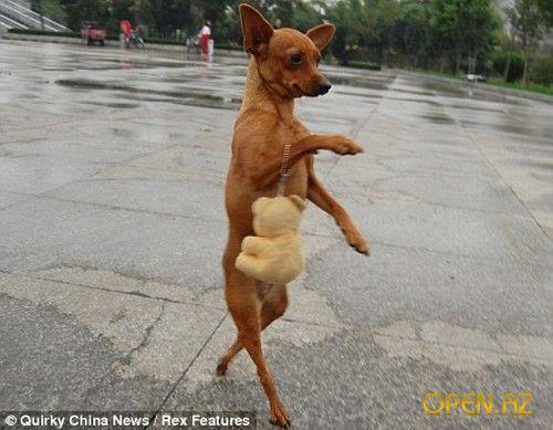 Сонник собака на задних лапах фото