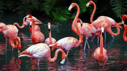 стая розовых птиц
