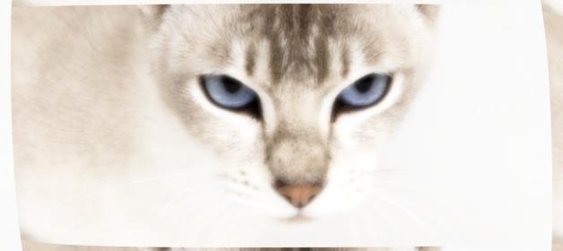к чему снятся кошачьи глаза