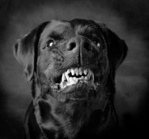 Фото Сонник приснилась большая черная собака