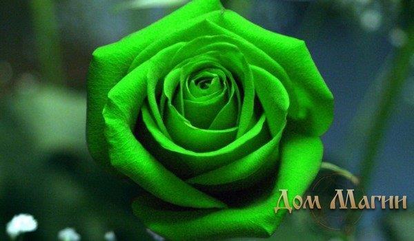 К чему снятся цветок зеленого цвета фото