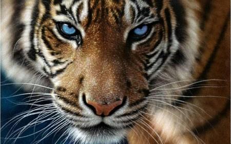 К чему снится играть с тигром фото