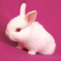 Разбираемся, к чему снится белый кролик!