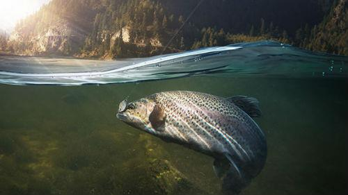ловить рыбу в прозрачной воде